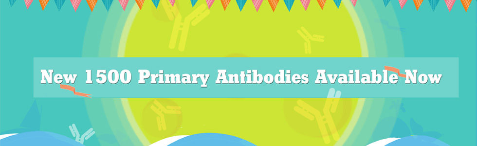 New 1500 Primary Antibodies