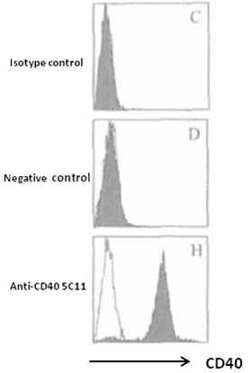 Mouse Anti-Human CD40 mAb