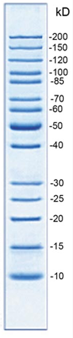 Unstained precise high range protein marker (10-200KD) - SAB | Signalway Antibody